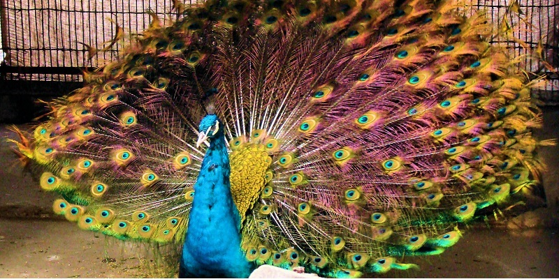 Lahore Zoo Tickets